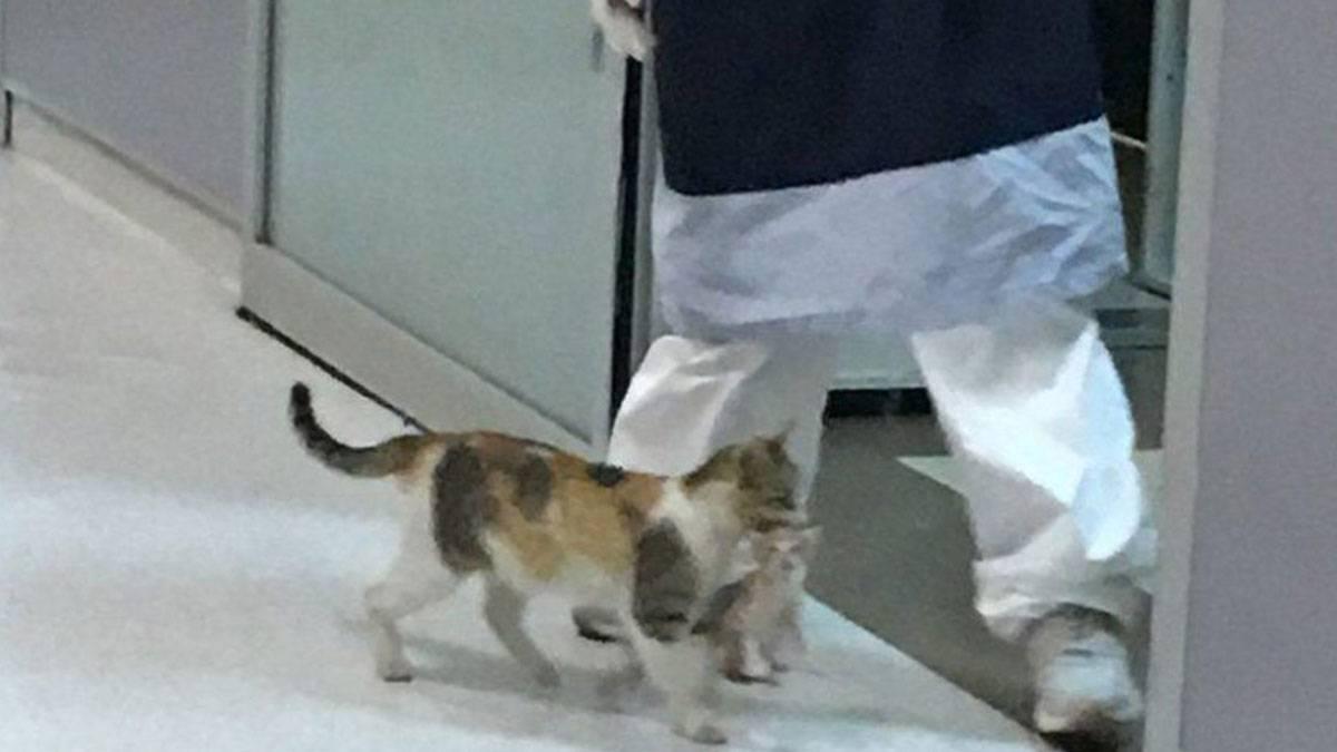 Anne kedi yavrusunu tedavi için bir hastanenin acil servisine götürdü