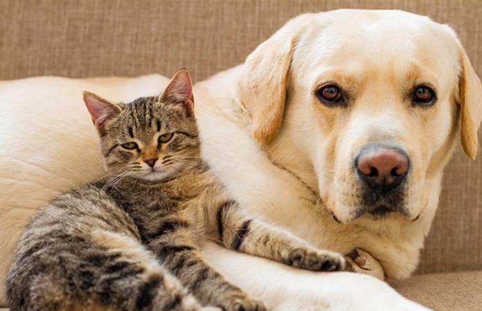Kedi ve köpek besleyenler dikkat! Deri altına çip ve kimlik zorunluluğu...
