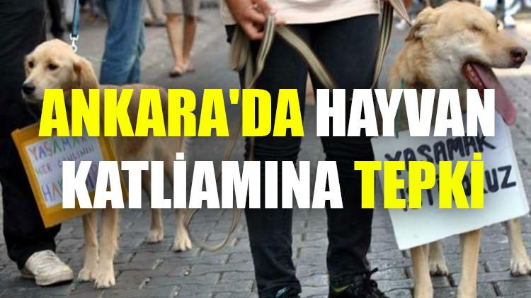 Ankara'da hayvan katliamına tepki