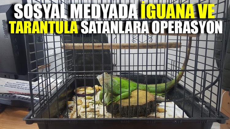 Sosyal medyada iguana ve tarantula satanlara operasyon