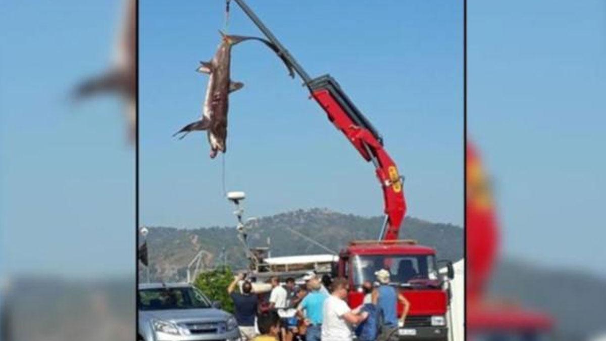 Fethiye'de üç metre boyunda iki köpek balığı yakalandı