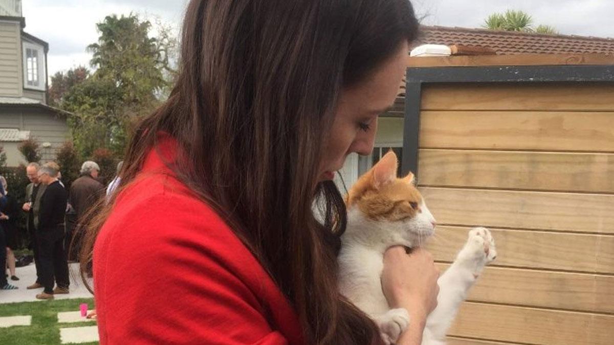 İki yıl sonra gelen itiraf: Yeni Zelanda Başbakanı'nın kedisini ben öldürdüm
