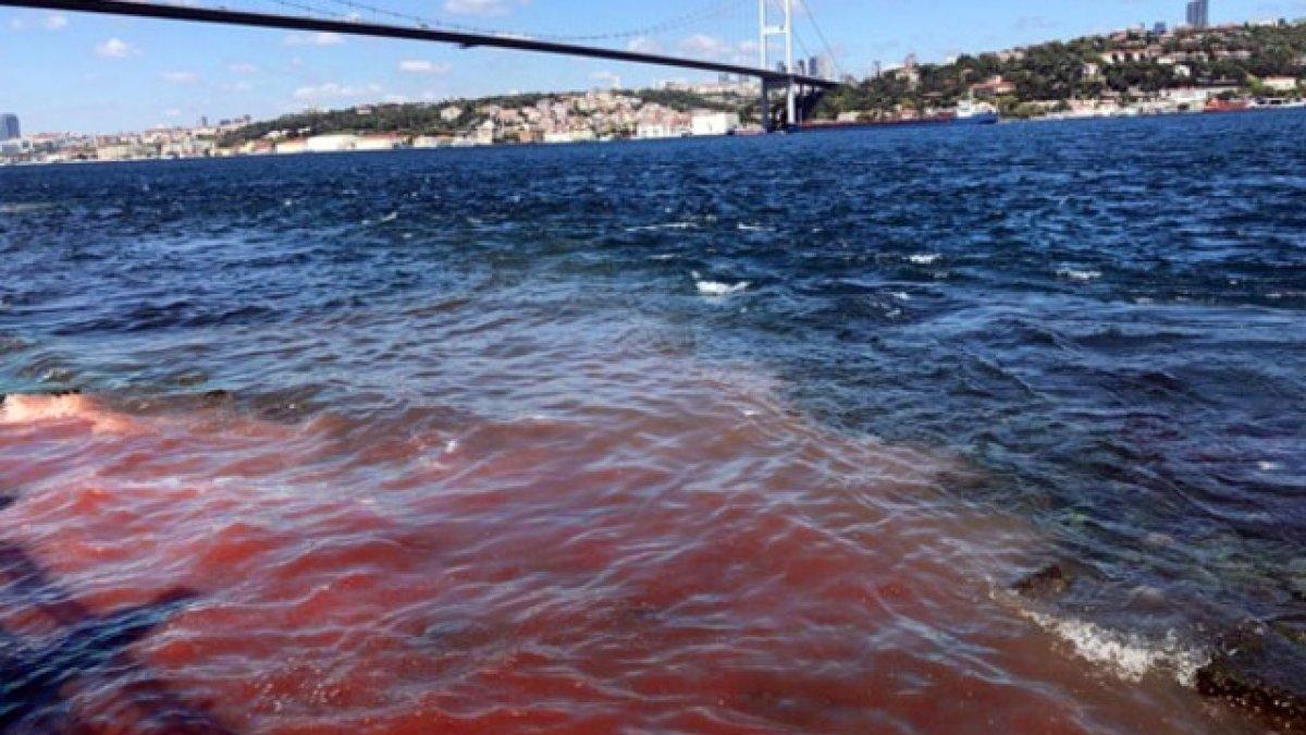 Tüm uyarılara rağmen yine aynı görüntü! Deniz kana bulandı...