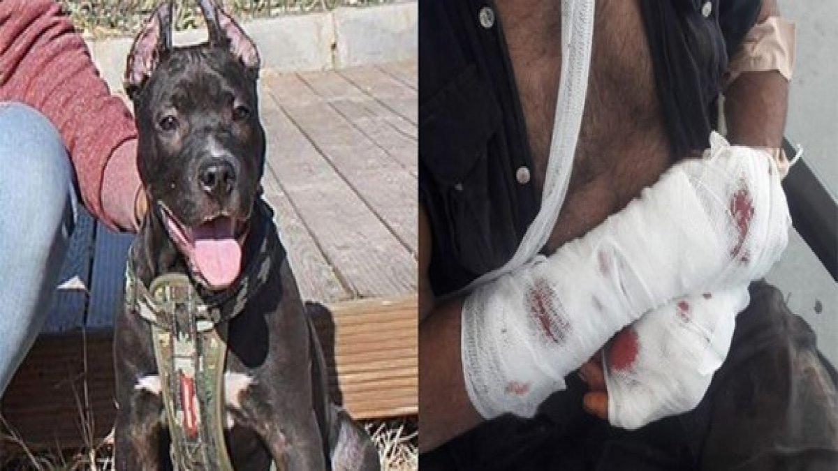 Aydın'da Pitbull dehşeti! Polis vurmak zorunda kaldı