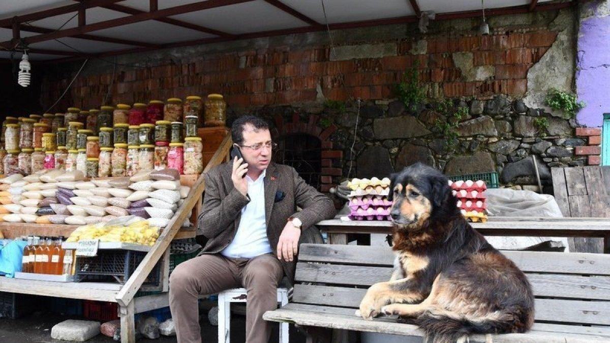 Ekrem İmamoğlu'ndan 'sokak hayvanları' talimatı