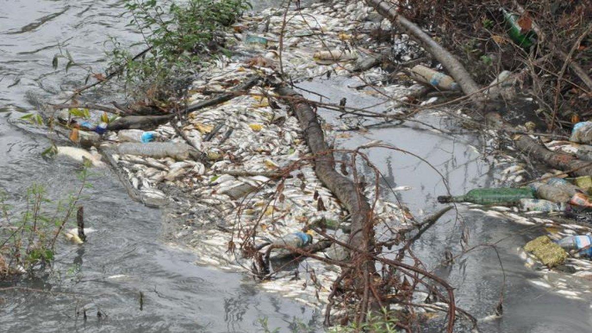 Korkutan görüntü! Irmağın suyu siyaha büründü, toplu balık ölümleri başladı