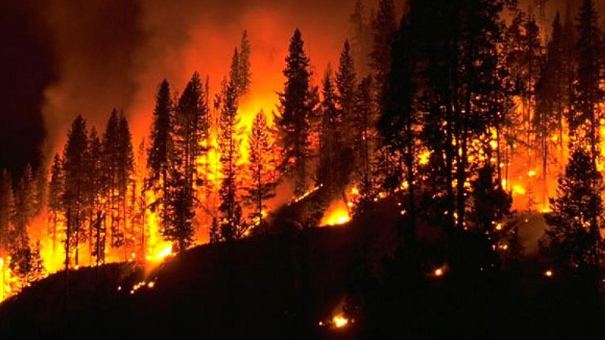 Bilim insanlarından orman yangınlarını önleyebilecek sprey