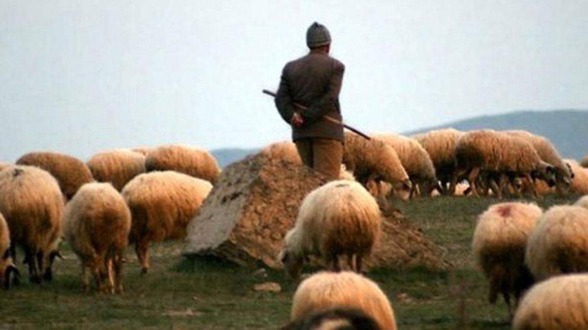 Afganistan'dan Türkiye'ye çoban 'ithal' edilecek