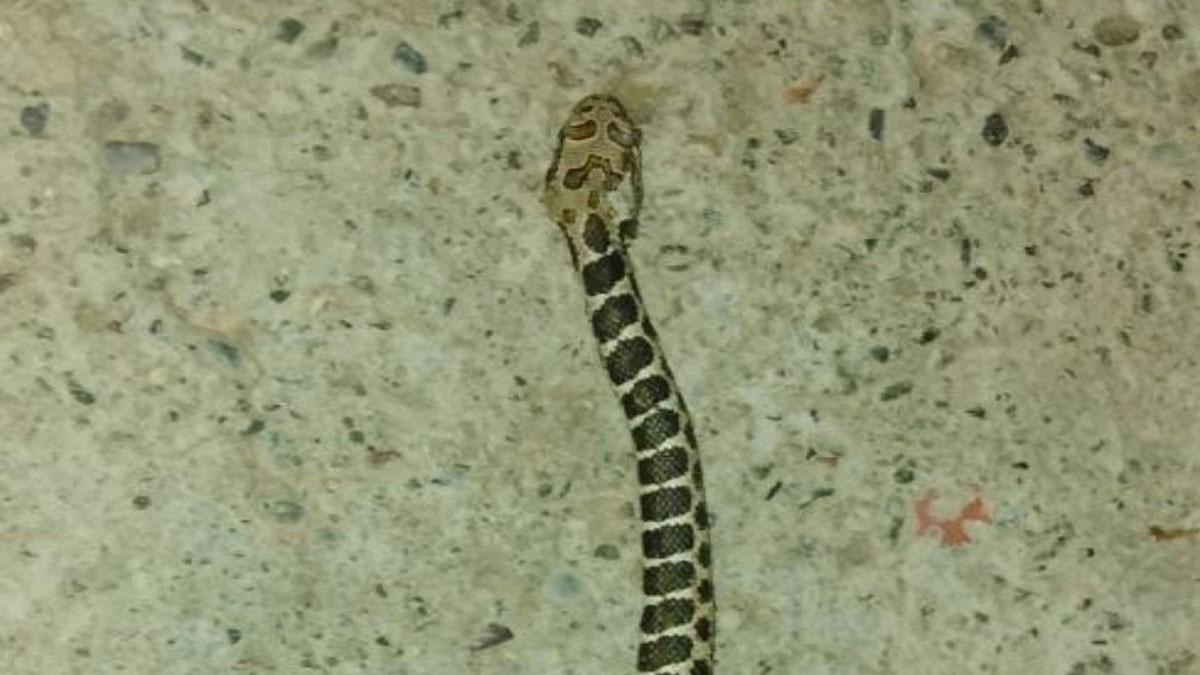 Mardin'de içme suyundan yılan çıktı