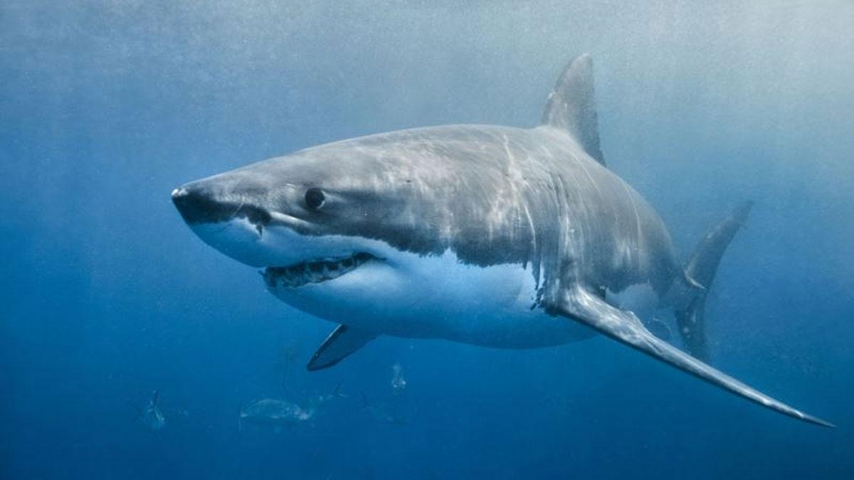 Kayıp turistin eli köpek balığının karnında bulundu