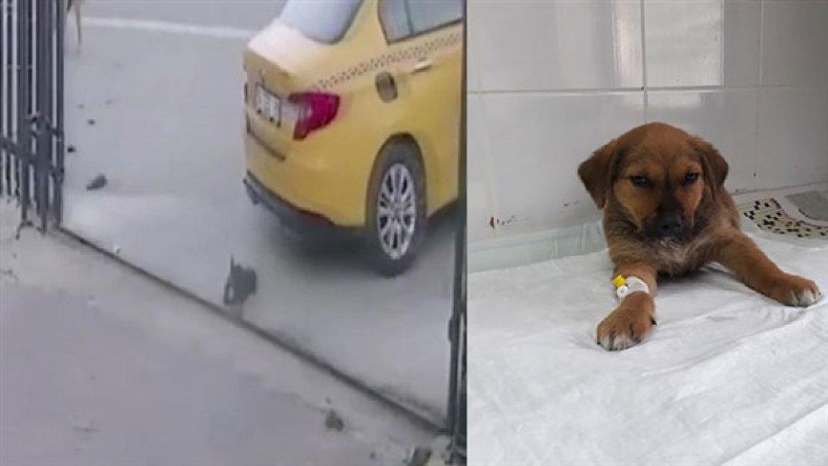 Yavru köpeği ezen taksicinin işine son verildi