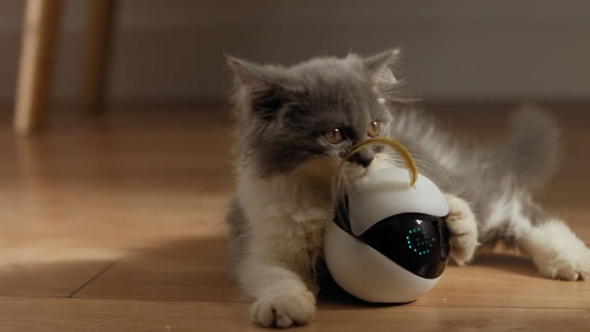 Чтобы с кошкой поиграть...