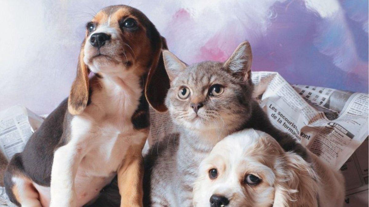 Bilim insanları açıkladı: Evcil hayvanlardan coronavirüs bulaşmaz