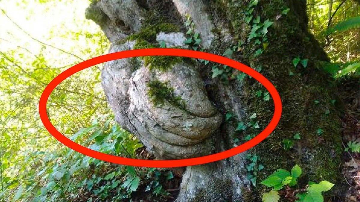 Bu ağaç görenleri şaşırtıyor