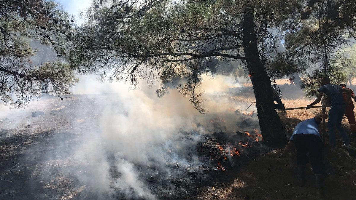 Gaziantep'te çıkan orman yangını söndürüldü