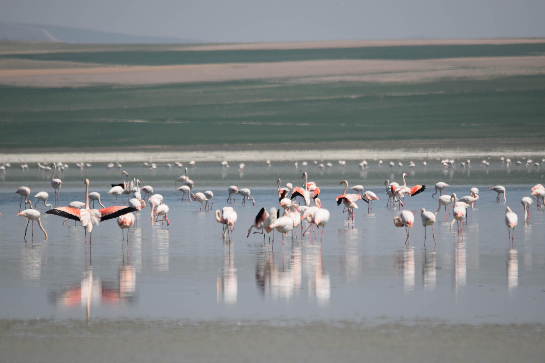 flamingo-cenneti-duden-golu-ile-komsusu-kucuk-gol-kurudu-5474-dhaphoto13.jpg