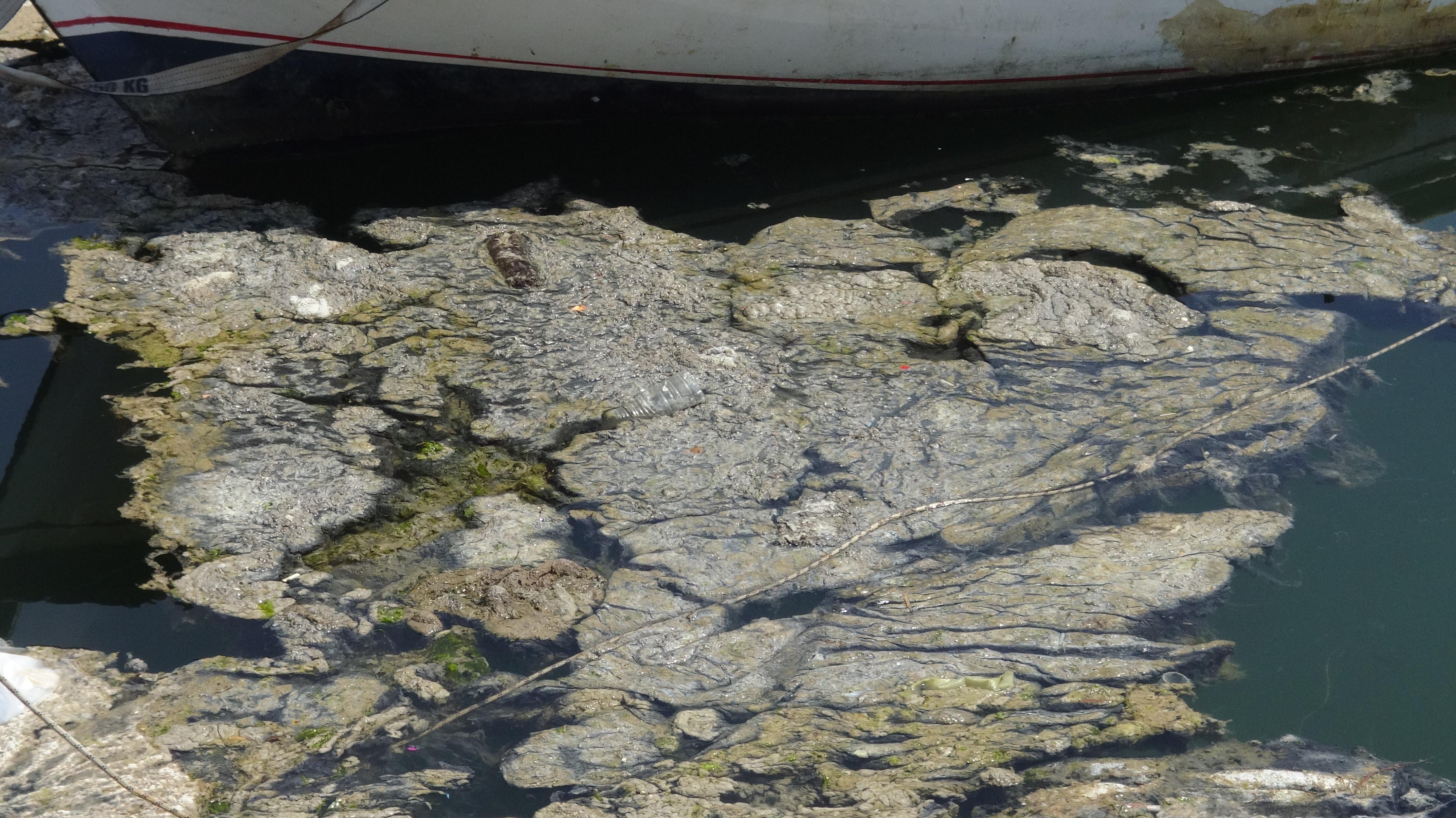 daricada-denize-girmek-yasaklandi-8335-dhaphoto11-002.jpg