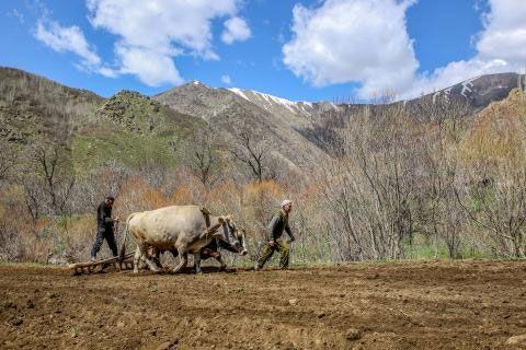 Domates neden mi 10 lira? 30 yılda 40 milyon dekar tarım alanı kayboldu