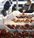 Tahıl ülkesiydik herşeyi ithal eder olduk; domatesi, kuru fasülyeyi, enginarı, hatta çay'ı ithal ediyoruz!