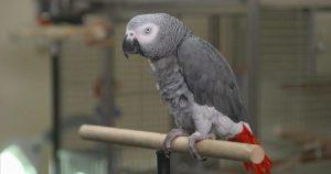 Papağanın tanık olduğu cinayet davasında karar çıktı