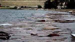 Bursa'nın Gemlik sahilinde binlerce ton sunta