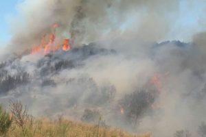 Ormanları para hırsı yakıyor! Reklam tabelası çalışması ormanı yaktı