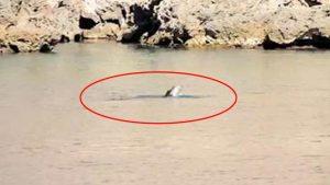 Antalya'da Akdeniz Foku beslenirken görüntülendi, uzmanlar uyardı: Sakın…