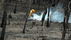 Ayvalık'ta yangın kontrol altına alındı, ortaya yürek yakan görüntüler çıktı!