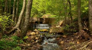 Kırklareli'nde kalker ocağı için 74 bin ağaç kesilecek!