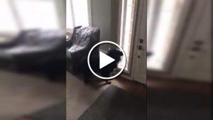 Sevimli köpek, kapı önünde okulunun servisini görürse…