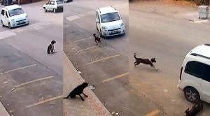 Köpeği kasten ezip öldüren o cani nasıl serbest kaldı? İşte cevabı!