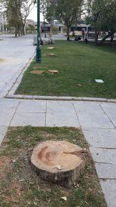 """Dün akşam yazdı! """"Gezi Parkı'nda ağaç katliamı"""" iddiası…"""