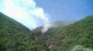 Munzur Koruma Kurulu: Operasyonlarla birlikte orman yangınları yoğunlaştı