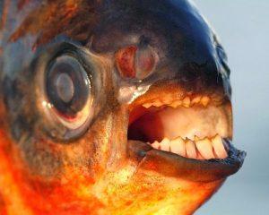 Sivas'ı ayağa kaldıran balıkla ilgili gerçek ortaya çıktı!