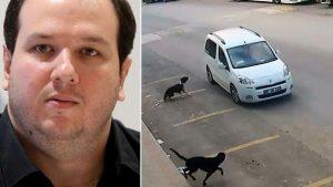 Antalya'da köpekleri ezen kişinin serbest kalmasına Şahan da isyan etti