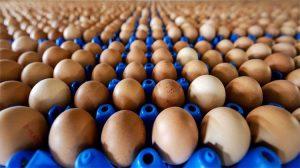 İlaçlı yumurta skandalı gittikçe büyüyor!
