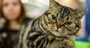 Dünyanın en yaşlı kedisi Nutmeg hayatını kaybetti