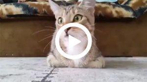 Yılın en iyi kedi videosu!