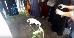 Kedi, ölen sahibini bırakmak istemedi