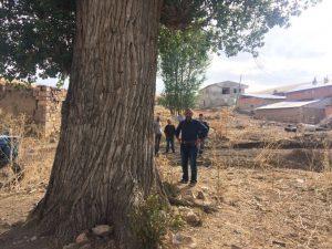 Bayburt'ta 300 yıllık kavak ağacı görenleri şaşırtıyor