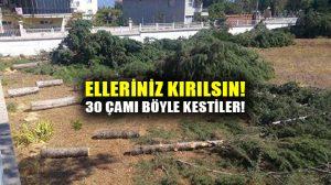 Denizli Acıpayam Meteoroloji İl Müdürülüğünden ağaç katliamı! 30 çam ağacını kestiler!