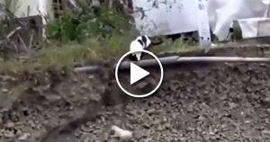 Kahraman kedi, çukura düşen yavru köpeği böyle kurtardı!