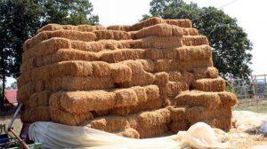 Türkiye Bulgaristan'dan 9 bin ton saman ithal etmek için anlaşma yaptı