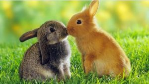 Polonya Sağlık Bakanlığı: Tavşanlar gibi çiftleşin