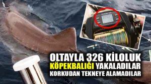 Oltayla köpekbalığı yakaladılar, korkudan tekneye alamadılar!