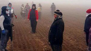 Tarlada çalışan kadınlardan Atatürk'e saygı duruşu