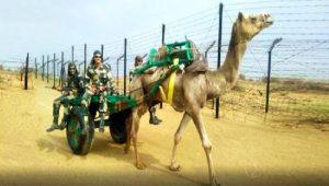 Hindistan ordusu Çin sınırında develerle devriyeye başlayacak