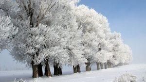 Erzurum tamamen dondu! Kartpostallık görüntüler ortaya çıktı
