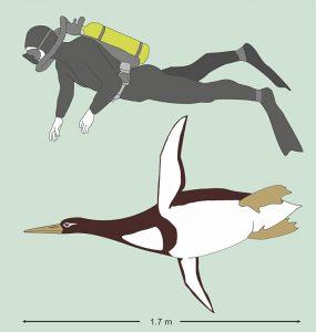 Dünyanın gözü o fosilde! İnsan boyutunda bir penguen mi?