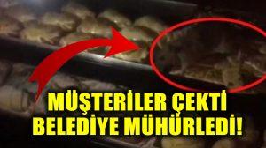 İstanbul'da bir pastahanede fare tezgahların üzerinde gezerken görüntülendi: Sosyal medyada olay oldu!